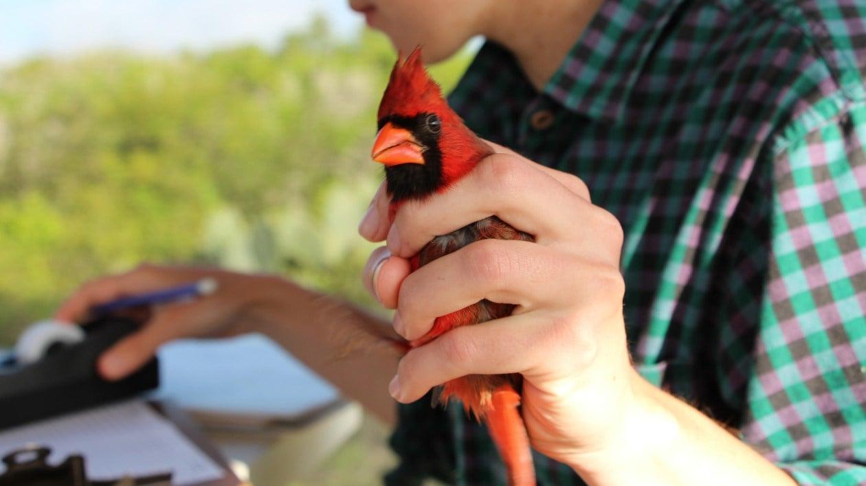 Workshop will include bird banding