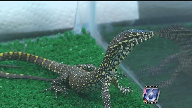 A photo from last year's Houston Exotic Reptile and Pet Show (KRIS)
