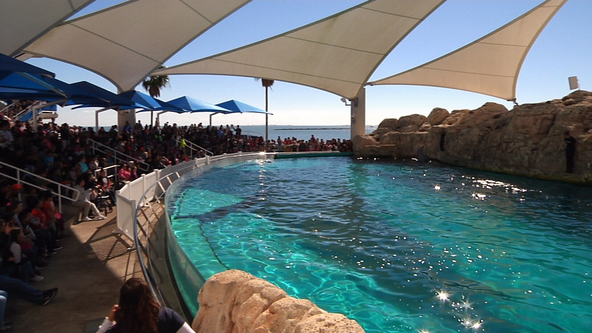 Crowds pack the Aquarium for a previous Dollar Day.