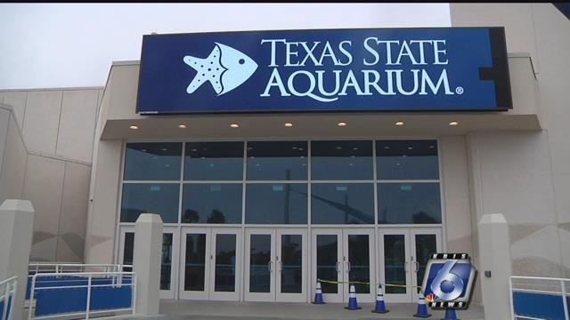 The Texas State Aquarium reports a record number of spring break visitors.