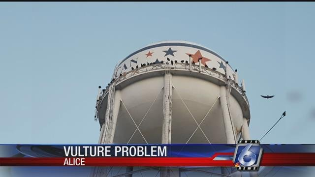 Alice city officials are asking federal officials to help them curb a vulture problem.