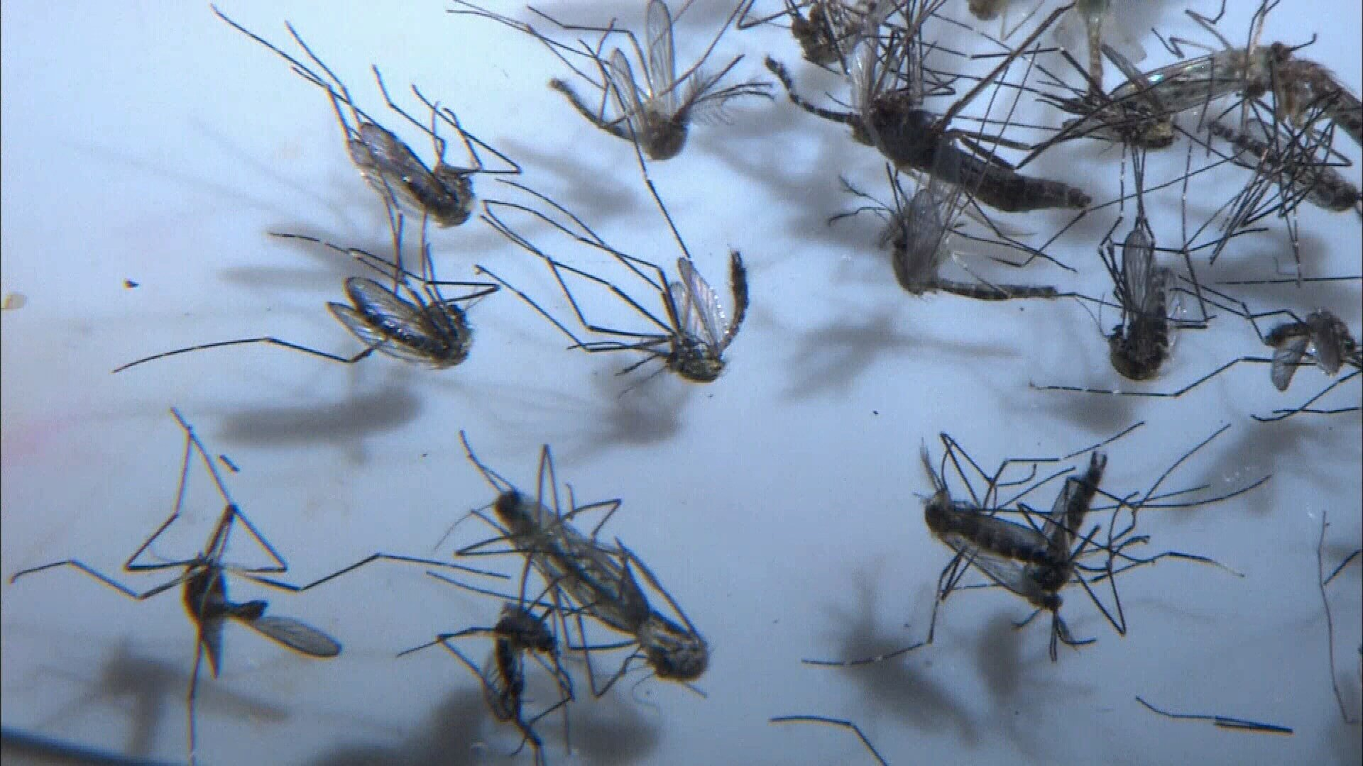 West Nile detected in Yakima County