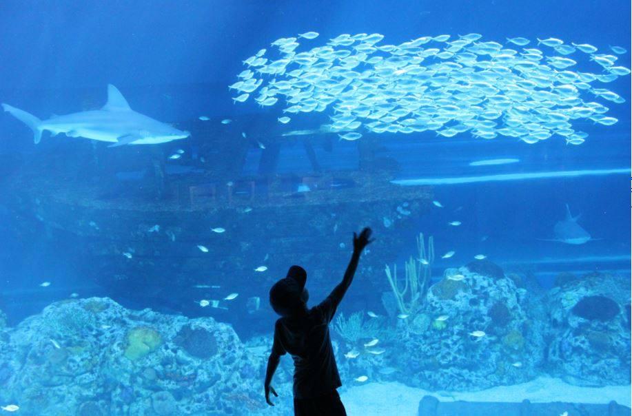 Texas State Aquarium_Facebook