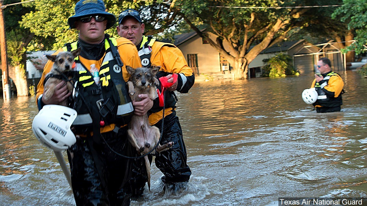 PHOTO: National Guard members rescue animals from floods during the Hurricane Harvey storm, Photo Date: 9/1/2017