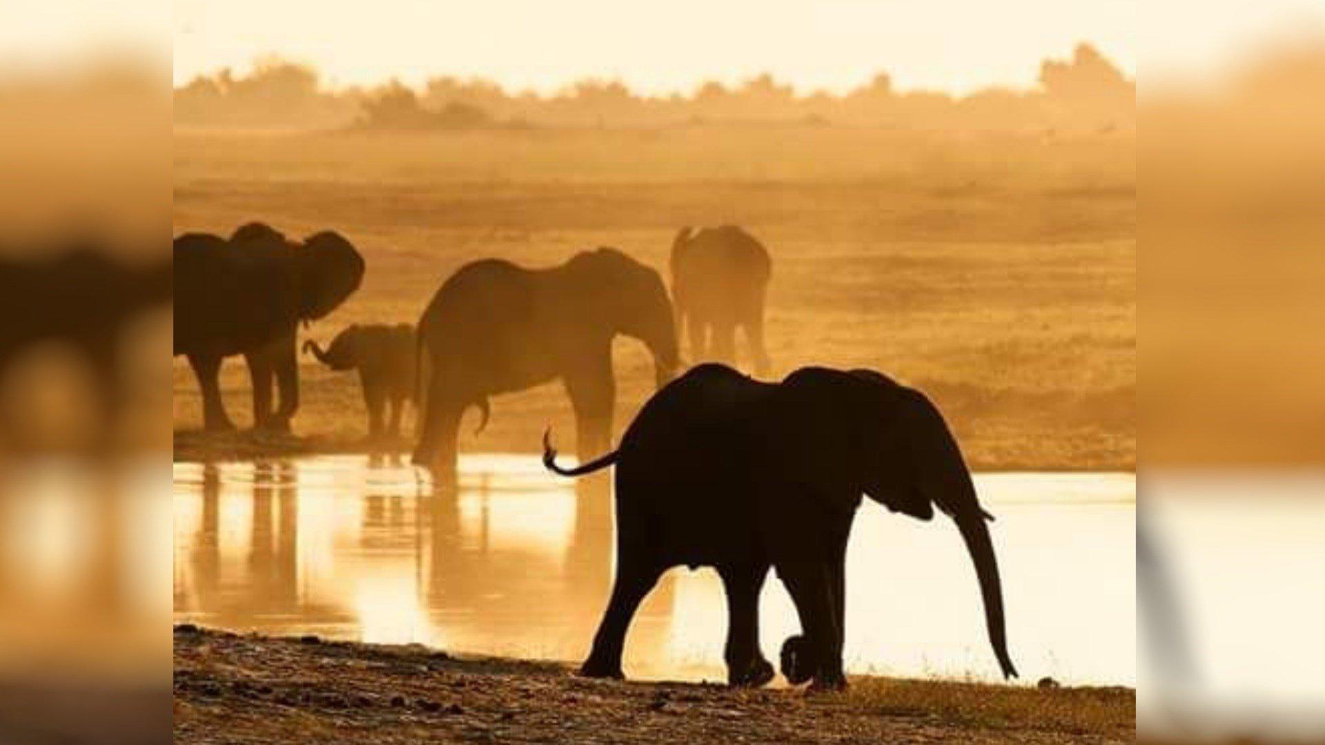 Photo: Botswana Government/Twitter