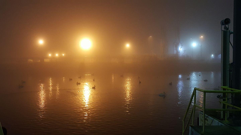 Dense fog is seen over at the Port of Corpus Christii (Photo Courtesy: Mark Valdez )