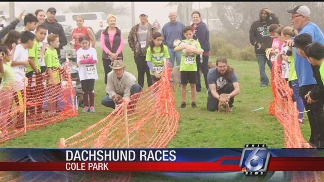 Dachshunds raced for the gold in a contest of their own at Cole Park.