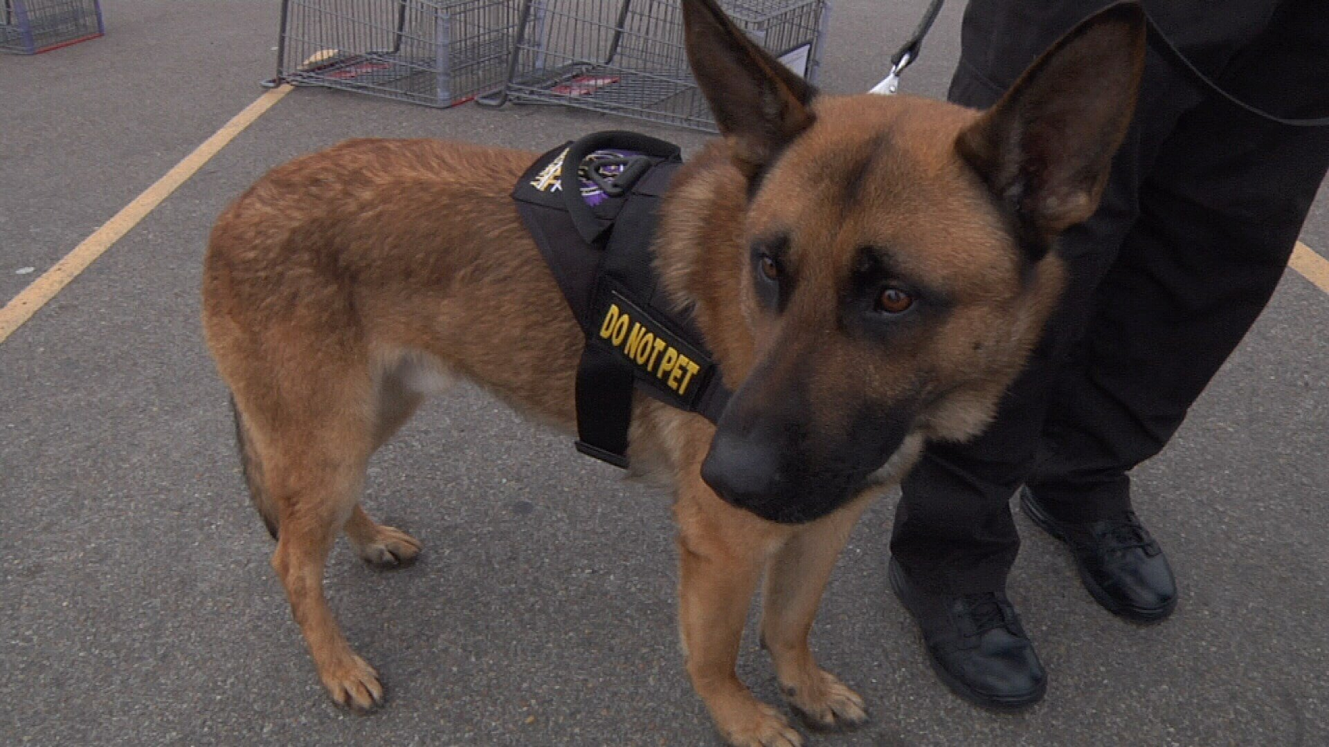Six K9s are now working with security guards at HEB stores in the Coastal Bend.