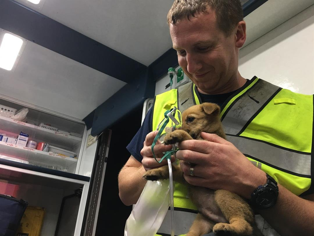 Firefighter/medic Justin Drexler at the scene administered oxygen to a dog rescued from a house fire.