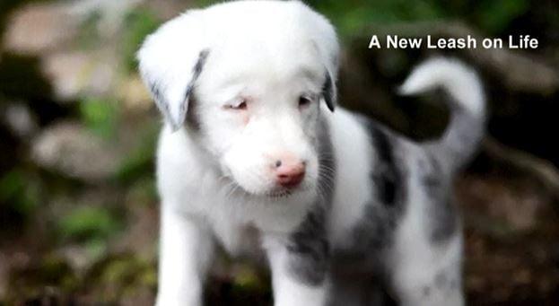 Deaf puppy is saved after 30-hour rescue effort in Alabama