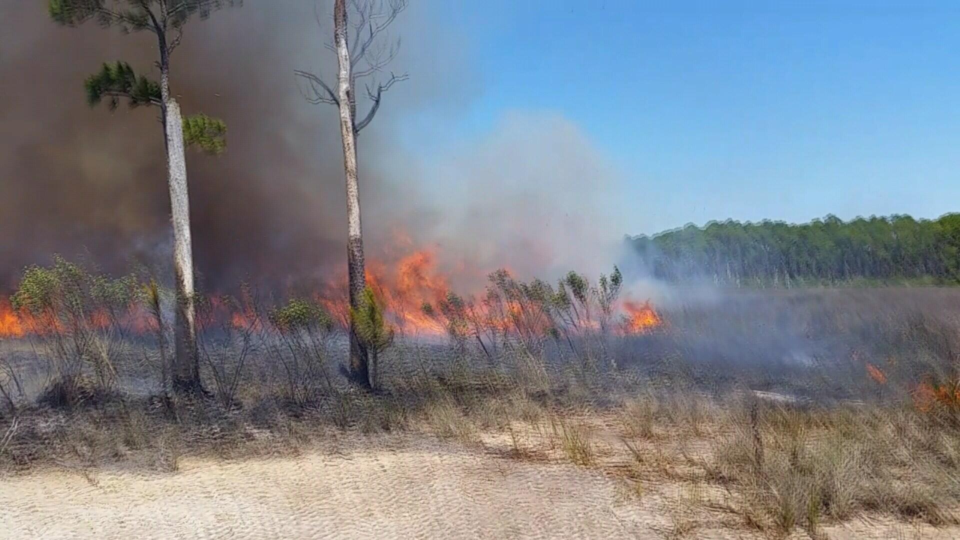 Control burn on a Mississippi wetland