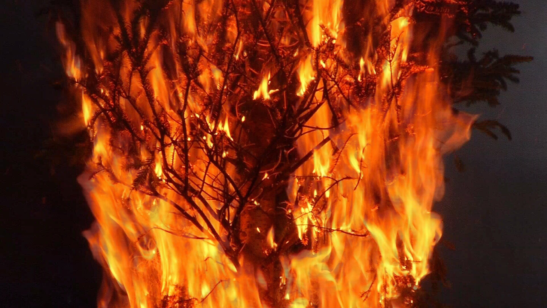 CCFD Sets Christmas Tree On Fire To Educate Public Of Tree Dange  - Christmas Trees On Fire