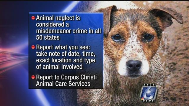 Home KRISTVcom Continuous News Coverage Corpus Christi - 16 animals way chilled even care right now