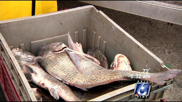 Fish caught in local waters is safe to eat for What fish is safe to eat