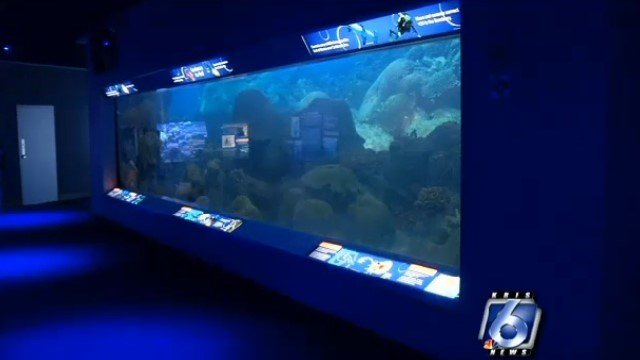 The Texas State Aquarium is in the process of restocking exhibits that ...